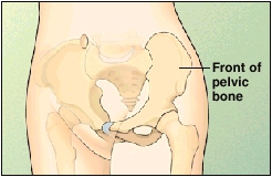 Image of the pelvis showing front of pelvic bone